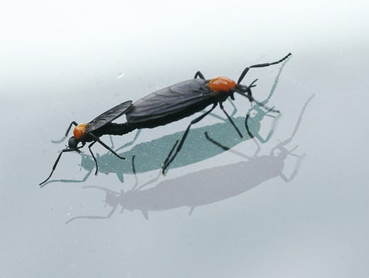 Pesky insects ready to bug Brevard
