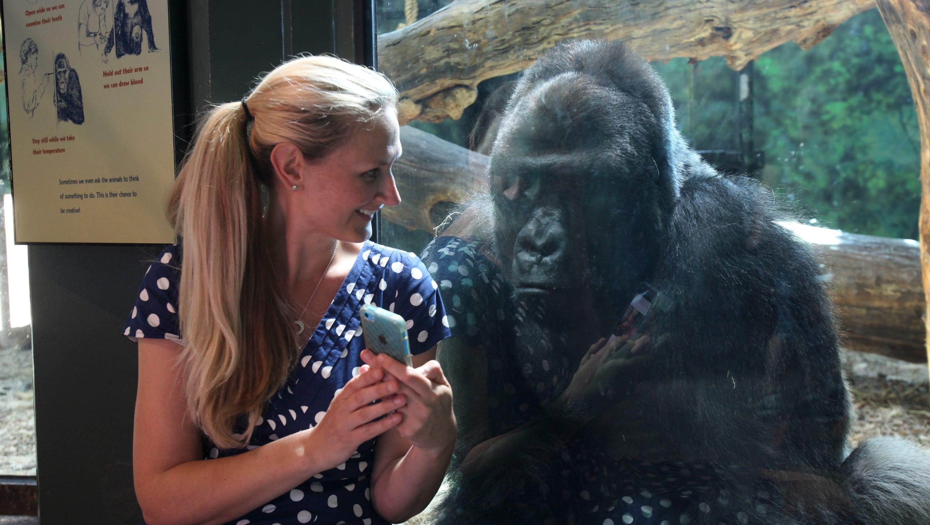 Louisville S Selfie Loving Gorilla Is A Star