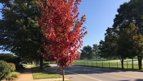 Bright, early fall color is starting to appear around