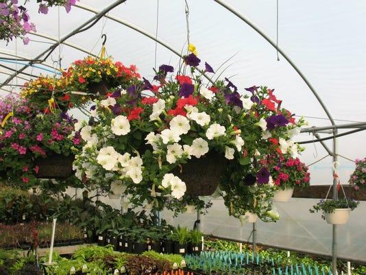1 - gcy Kiwanis plant sale