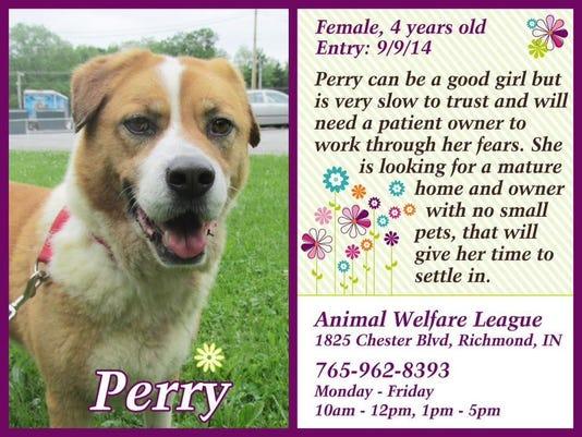0608 pet of week from website
