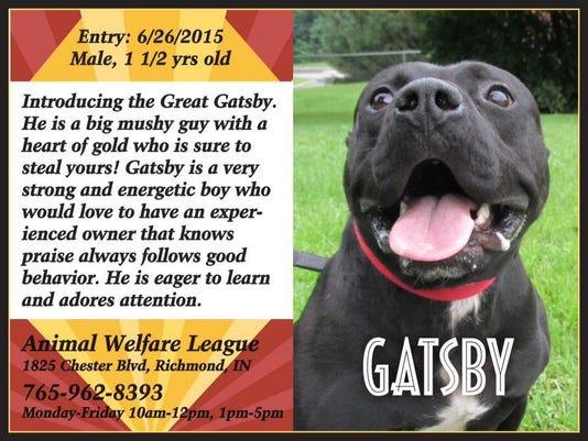 0817 rch pet of week Gatsby