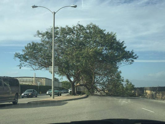 Oxnard-tree.jpg