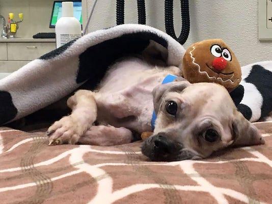 patersondog.jpg