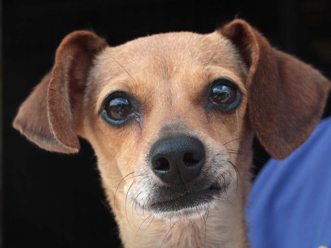 The Ouachita Parish Animal Shelter takes in more than
