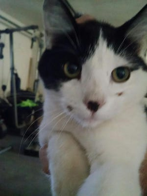 A Santa Clara man was accused of animal cruelty after dropping off a black and white cat in a trap to the Ivins Animal Shelter. He was found not guilty Monday, March 7, 2015.