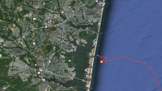 Great white shark Mary Lee lingered about 2 miles off short of Lavallette Sunday morning, according to OCEARCH, a nonprofit that is monitoring shark movements.