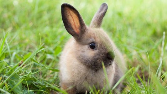 People for the Ethical Treatment of Animals is calling on the Air Force Academy to stop killing, skinning and cooking rabbits as part of cadets' survival training.
