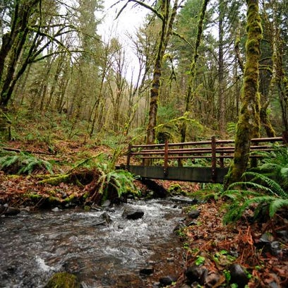 Multiple scenic footbridges cross Plunkett Creek along trails at Beazell Memorial Forest Park near Philomath. With more than 500 acres, the park is the largest in Benton County.