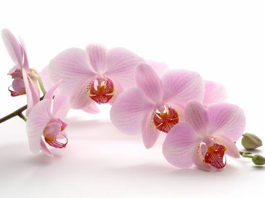 orchidMedium.jpg