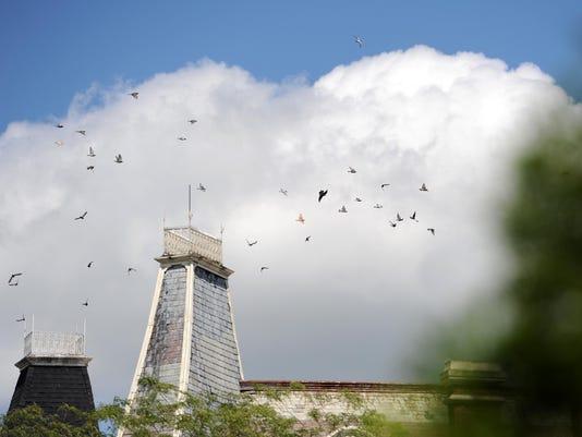 CGO 0820 Pigeon Problem