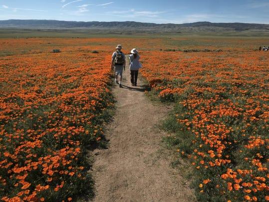 Desert Super Bloom (3)
