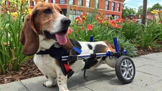 Joe Tamborello's basset hound Charlie has explored Indianapolis to help create this list.