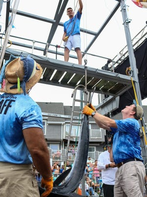 Alex Davis, left, and Mike Hannon weigh a marlin at the White Marlin Open on Monday, Aug 8, 2016.