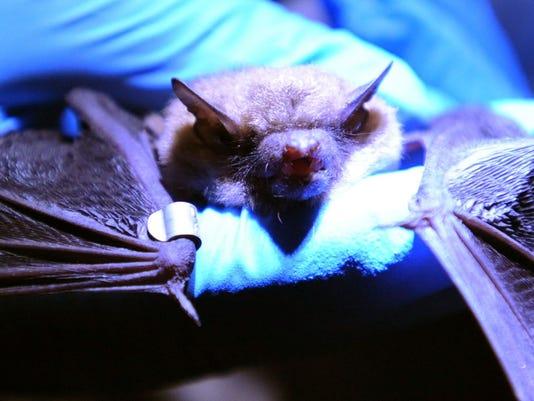 bat.count