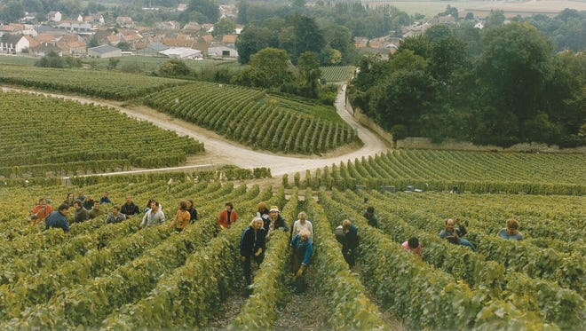 Champagne Taittinger manages more than 711 acres of vineyards, some of which are in the village of Pierry, seen here.