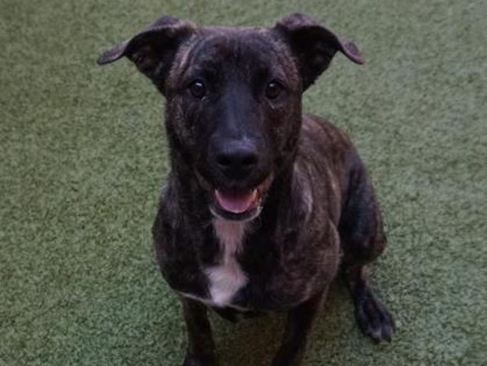 Tia is new to the Farmington Regional Animal Shelter