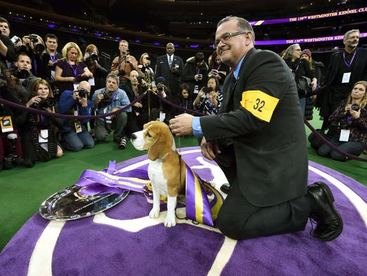 Linkedin westminster kennel club dog show fullscreen post to facebook