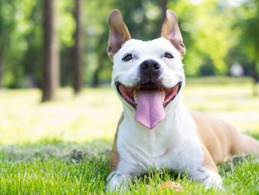 happy-dog_large.jpg