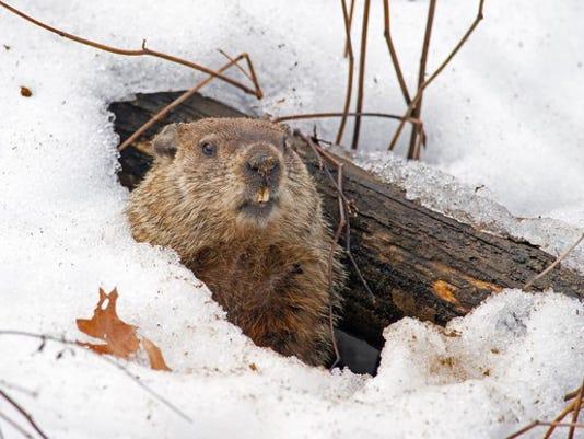 groundhog-emerging-for-dividend-raises_large.jpg