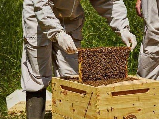 Bee Photo.jpg