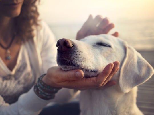 Alexa's Dog Feeder skill should cut down on over-feeding your pooch.