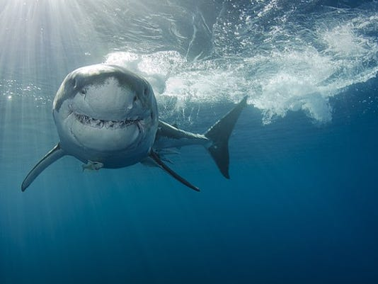 gettyimages-shark-week_large.jpg