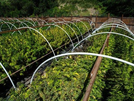 marijuana-cannabis-weed-pot-grow-farm-legal-getty_large.jpg