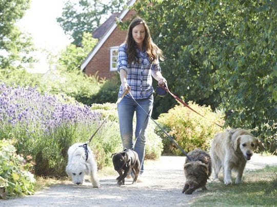 young woman walking four dogs through park