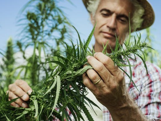 cannabis-hemp-farmer-marijuana-pruning-plant-getty_large.jpg