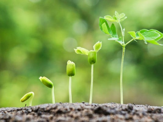 078-plants-growing-stairs-getty_large.jpg