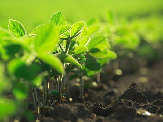 106-soybean-plants_large.jpg