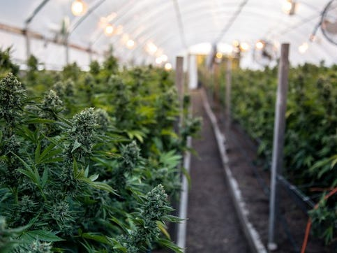 Legalizing pot is an incomplete answer: Editorial