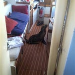 """This Sunday, May 10, 2015 photo provided by Michael Duffy, shows a 35-pound sea lion pup that found it's away aboard a yacht in San Diego, Calif. Mother's Day may have been a bit of a bust for the baby sea lion. Michael Duffy, 48, said he was on his 41-foot Kettenburg boat """"Elixir"""" at the San Diego Yacht Club when he awoke at 2:30 a.m. Sunday to sneezing and snoring. Duffy said the pup was probably looking for his mom but found him instead. He softly coaxed the baby sea lion back up the stairs, off the boat and into the water. Duffy, an advertising copywriter, said he nicknamed the pup """"Gilligan"""" after the character on """"Gilligan's Island"""" who The Skipper called his little buddy."""