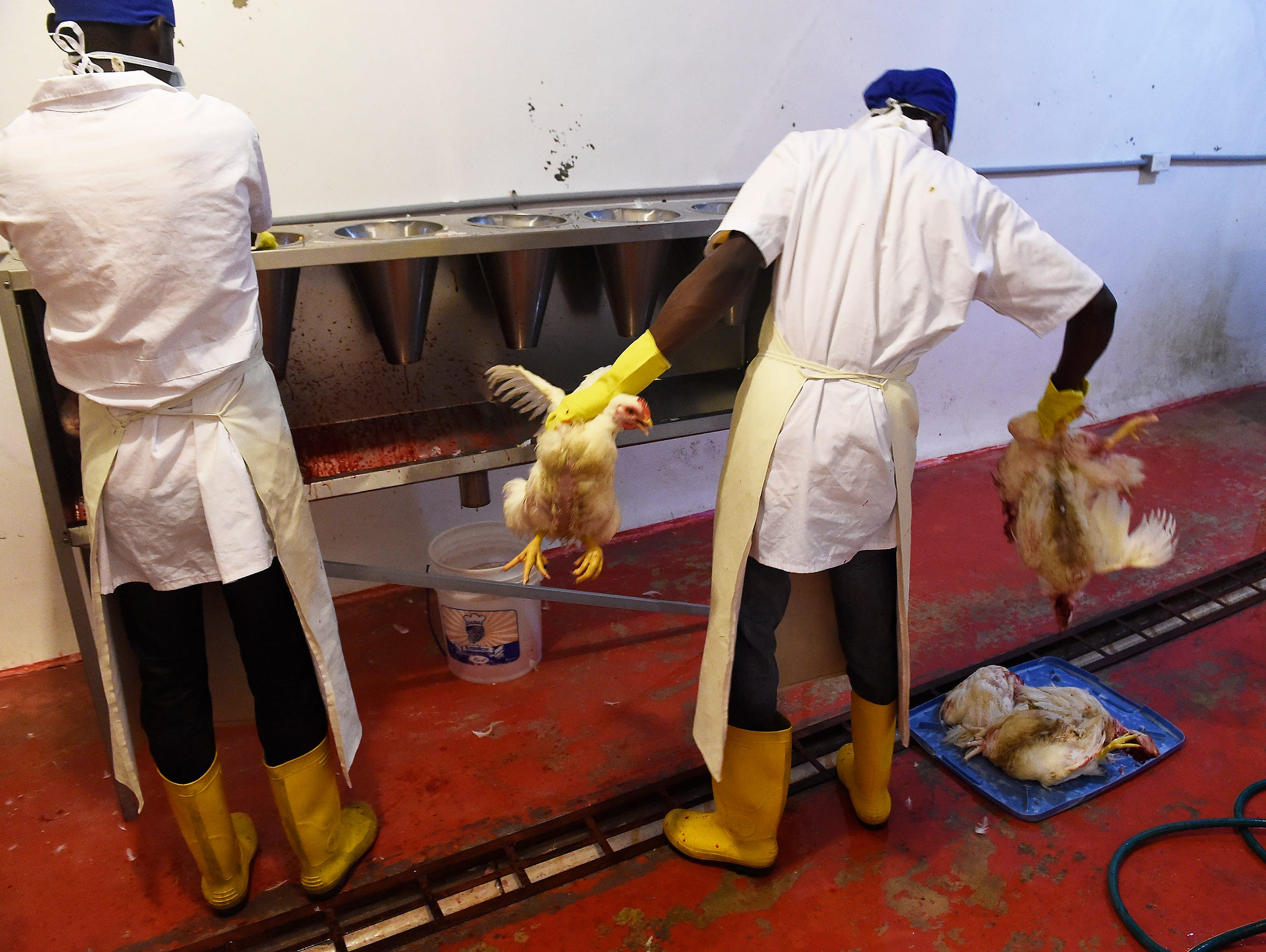 KORE operators process locally raised chickens at KORE's