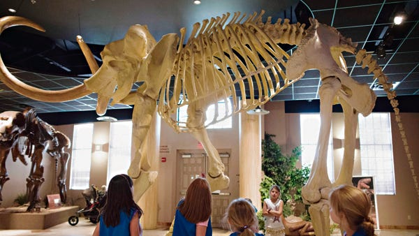 Young visitors look up at a mammoth's skeleton in the lobby of the Arizona Museum of Natural History in Mesa.