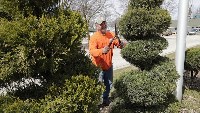 Avoid shearing evergreens in fall. Sheared needle tips can turn brown as the winter winds can desiccate the tips.
