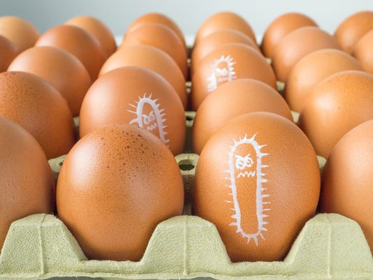 Salmonella bacterium chicken eggs