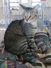 Benson is available at Sun Cities 4 Paws, 10807 N.