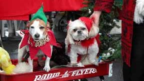 """Dogs dressed up for the """"Reindoggie Parade"""" on Dec. 7."""