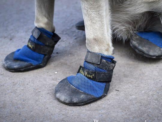 Frida usa unos protectores de patas tipo 'pantunfla',