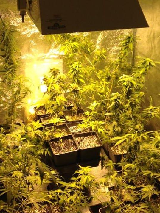 marijuana grow operation.png