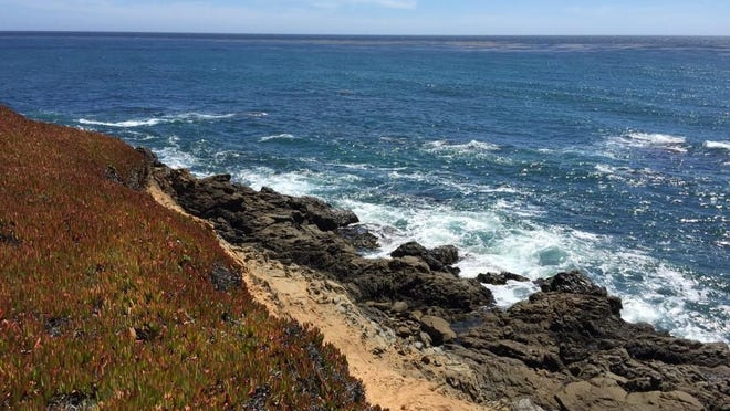 The West Fiscalini Ranch Preserve is a 364-acre natural area open to the public along Cambria's Pacific Coast.