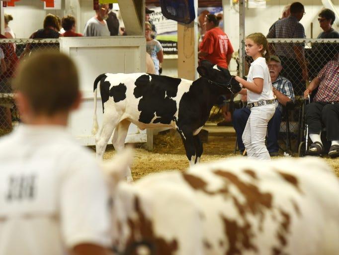 Junior Fair Dairy Showmanship at the Muskingum County