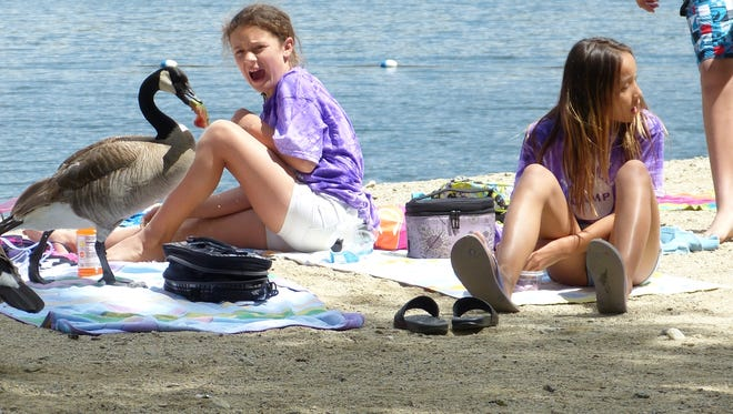Ten-year-old Taylor Hatch wasn't very happy when a goose stole a piece of her watermelon at Brandy Creek beach in June 2017. Also shown is 11-year-old Mia Saechao.