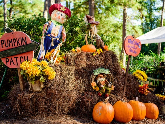 FSV_PumpkinPatch_BB_10202015_0001