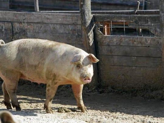 -LSJBrd_01-11-2014_LSJ_1_A006~~2014~01~10~IMG_Pork_Producers_Pract_9_1_B864O.jpg