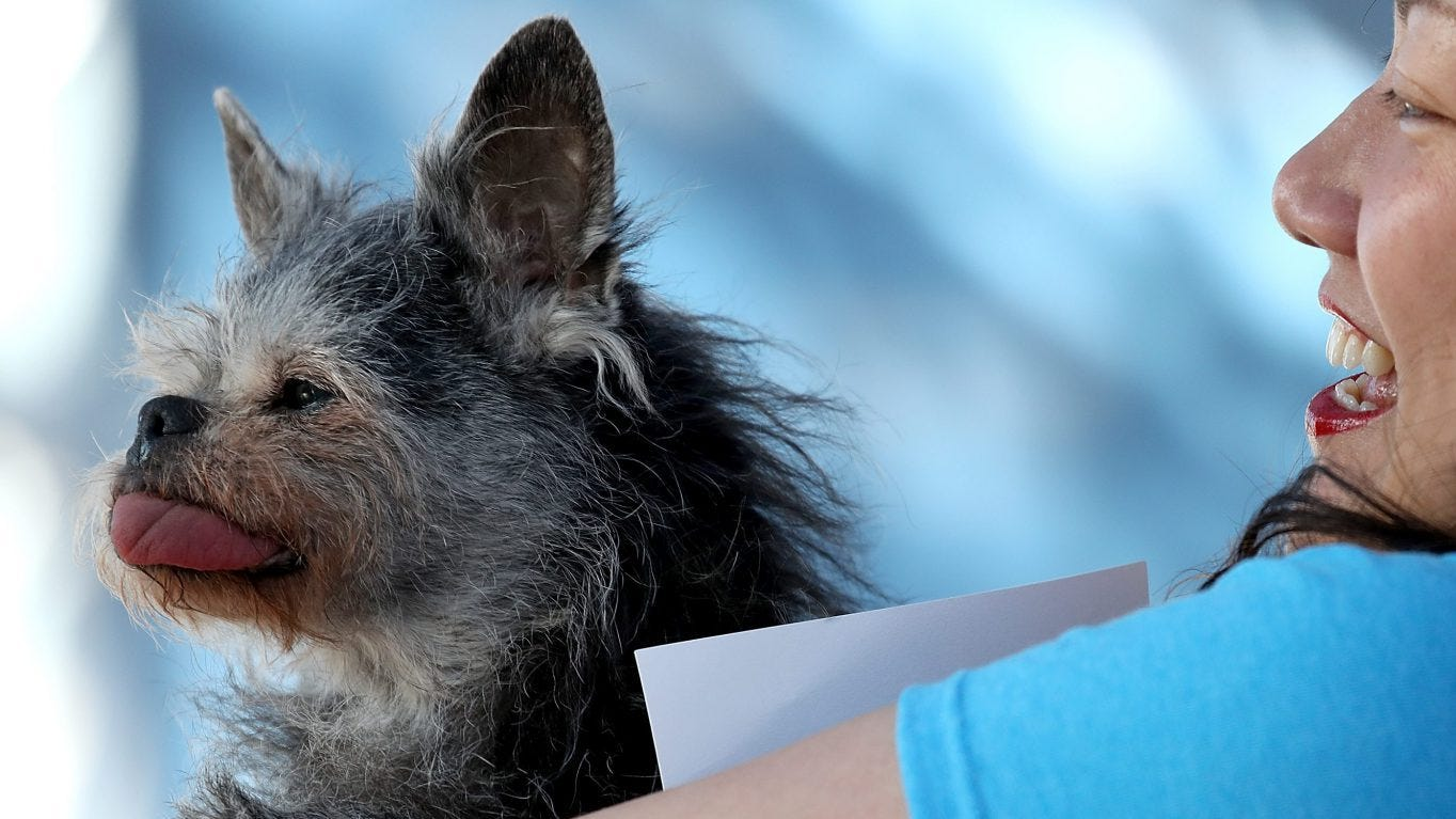 Ugliest dogs of all time: Only an owner could love these faces