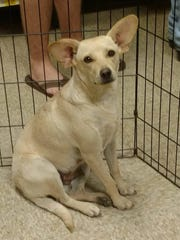 Ellen is very social and seems to get along well with other dogs. She weighs 20 pounds and likes outdoor activity. She is crate trained. The $175 adoption fee helps cover spay/neuter, vaccinations, microchip, vetting, food and care. Call Pets Without Partners at 243-6911. Go to www.petswithoutpartners.org.