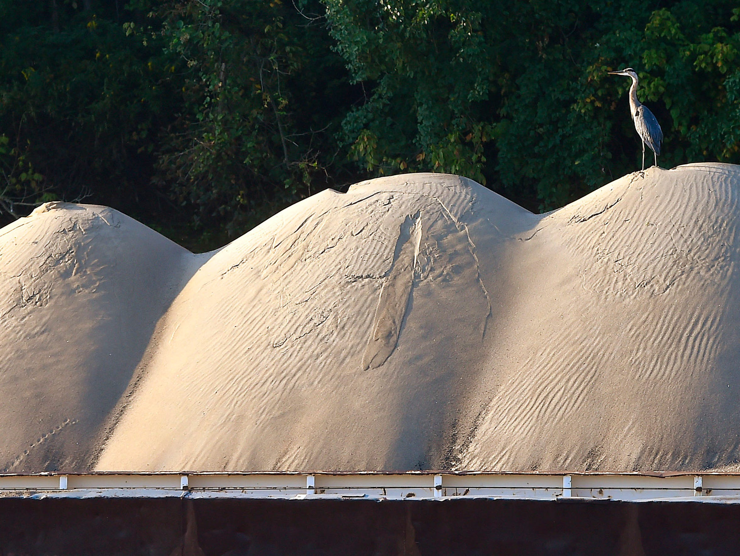A heron sits atop a pile of sand waiting to be delivered